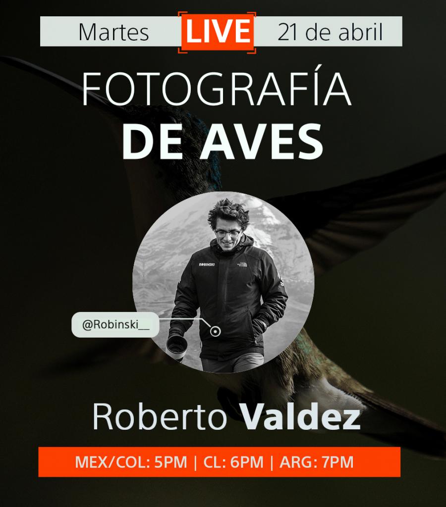 curso de fotografia de aves gratis