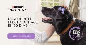 Prueba gratis: Purina Pro Plan Optiage para mascotas