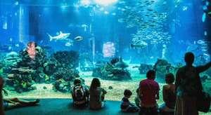 Lisboa y Entradas al Oceanário, el mayor acuario interior de Europa + 1 noche de Hotelazo 4*+Desayunos+Cancela gratis por solo 47€ (PxPm2)