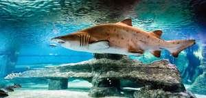 Aquarium Costa de Almería con Hotel 4* por 36€ p/p