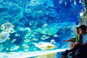 ChollazoFamilias Alójate en un hotelazo 4* + Entradas incluidasal Aquarium de Almería + Cancela gratis por solo 31€ (PxPm4)