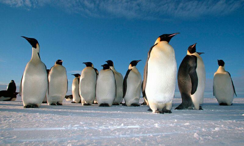 Apadrina un pingüino!