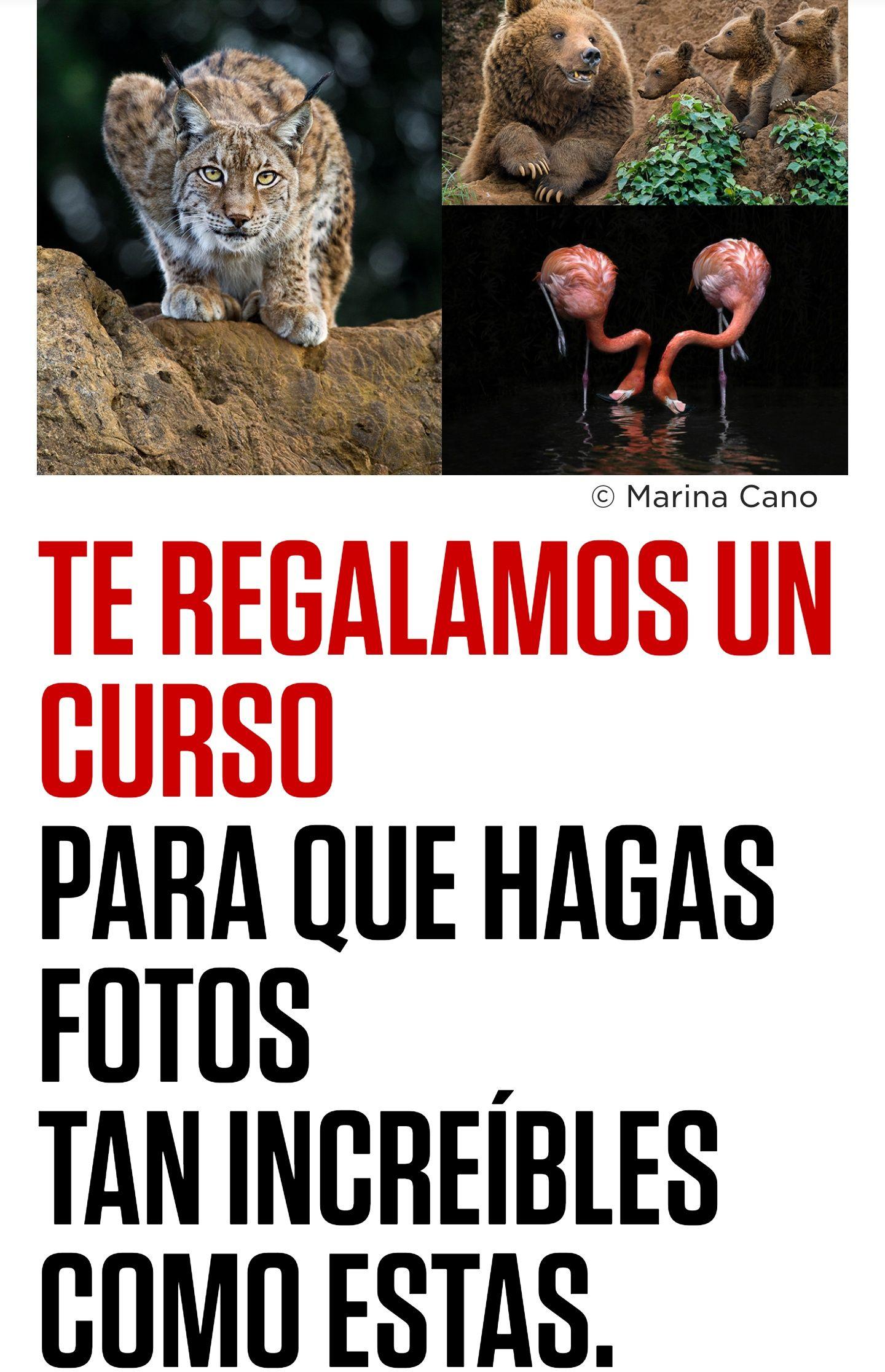 Cursos de fotografía de regalo con la compra de una cámara con Canon España