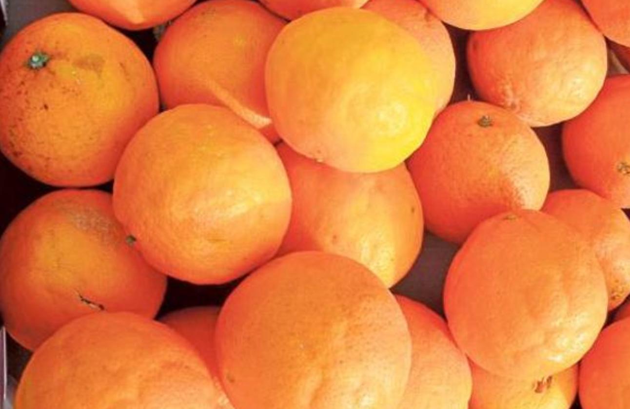 Valencia (jueves 14/02): 4.000 kg de naranjas gratis