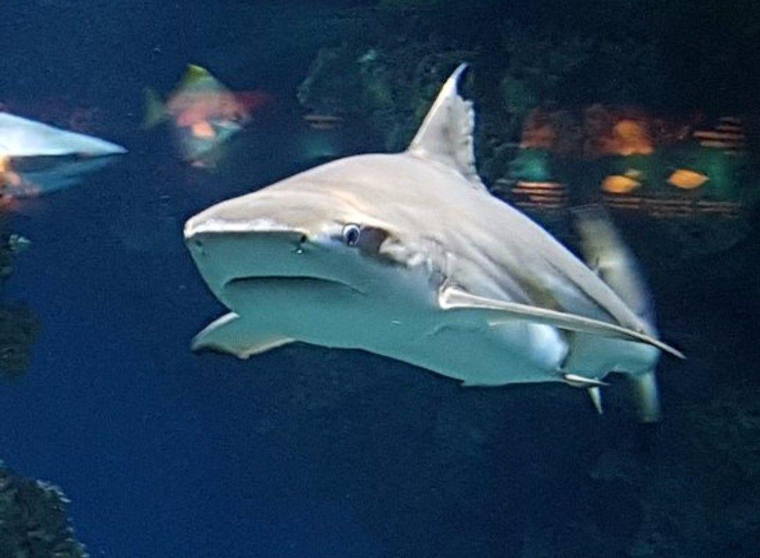 2x1 en Sumérgete con tiburones (Barcelona)