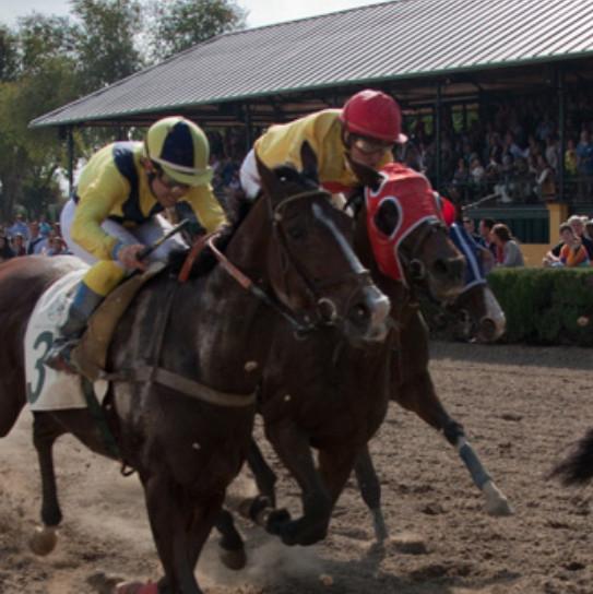 SEVILLA (28/02): Jornada gratuita de 5 carreras en el Hipódromo del Real Club Pineda