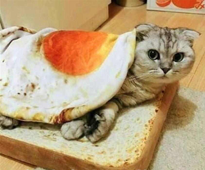 Un sandwich para comérselo enterito + Postre