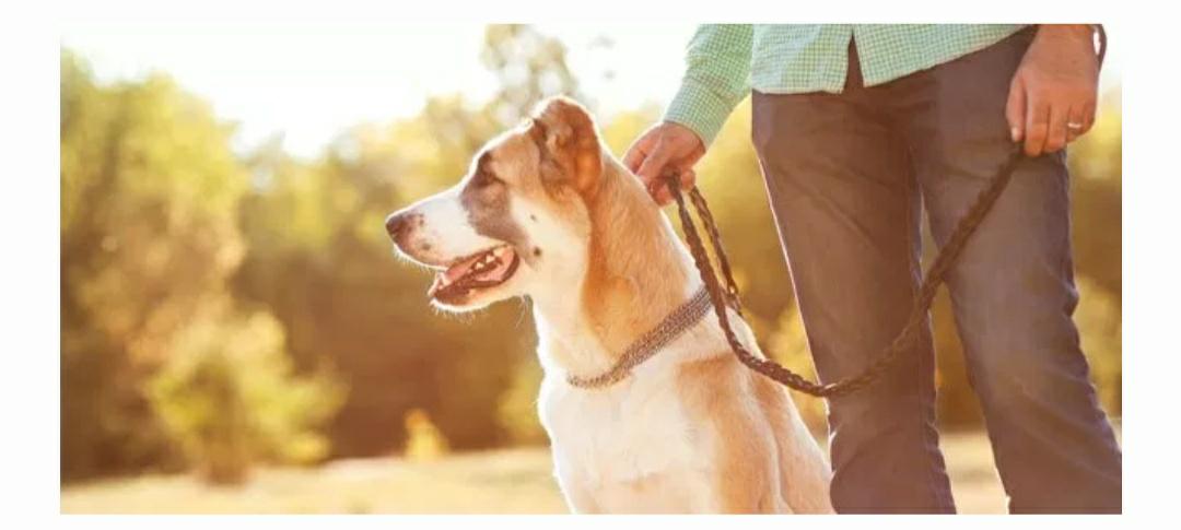Curso Online de Adiestramiento en cine para Perros GRATIS