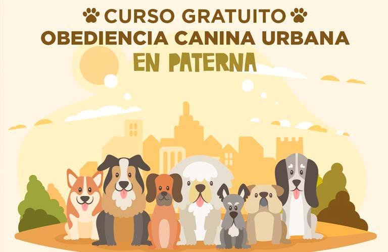 Curso de Obediencia Canina  GRATIS (Paterna)