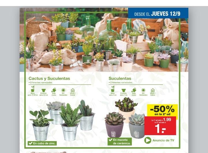 Cactus y Suculentas (Lidl)