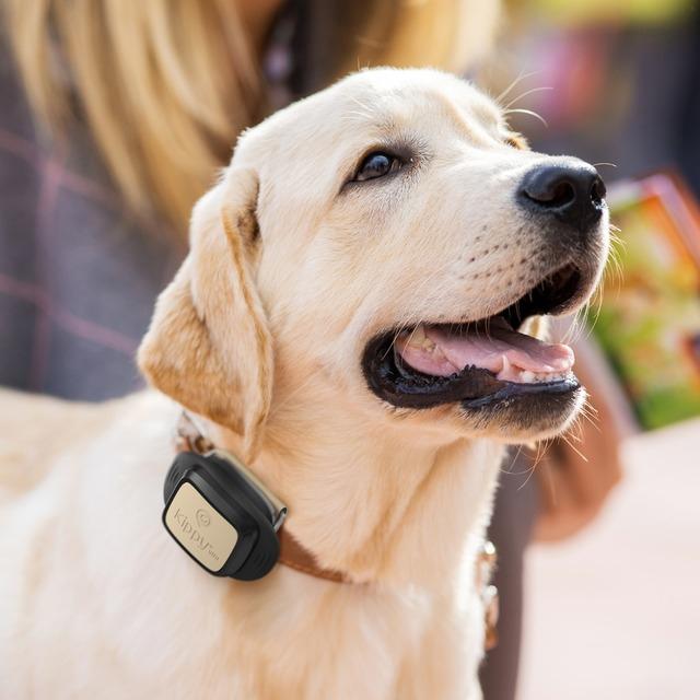 Localizador GPS y monitor de actividad para perros y gatos (Kippy + Vodafone)