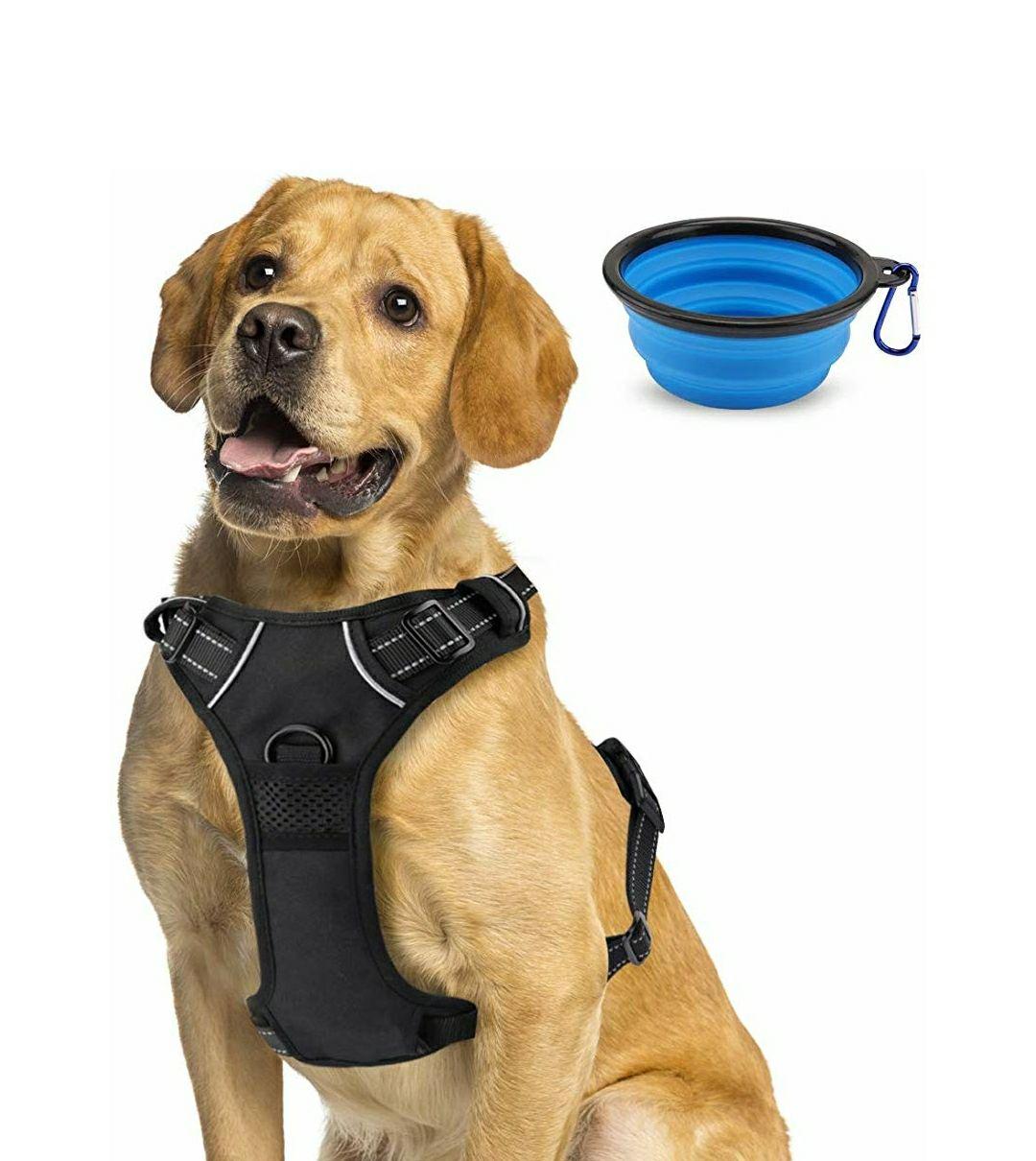 Arnés + Cuenco plegable Perro Mascota