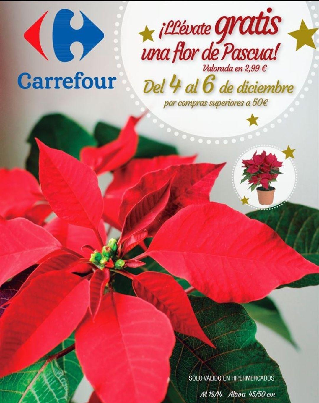 Flor de pascua de regalo por compras superiores a 50€
