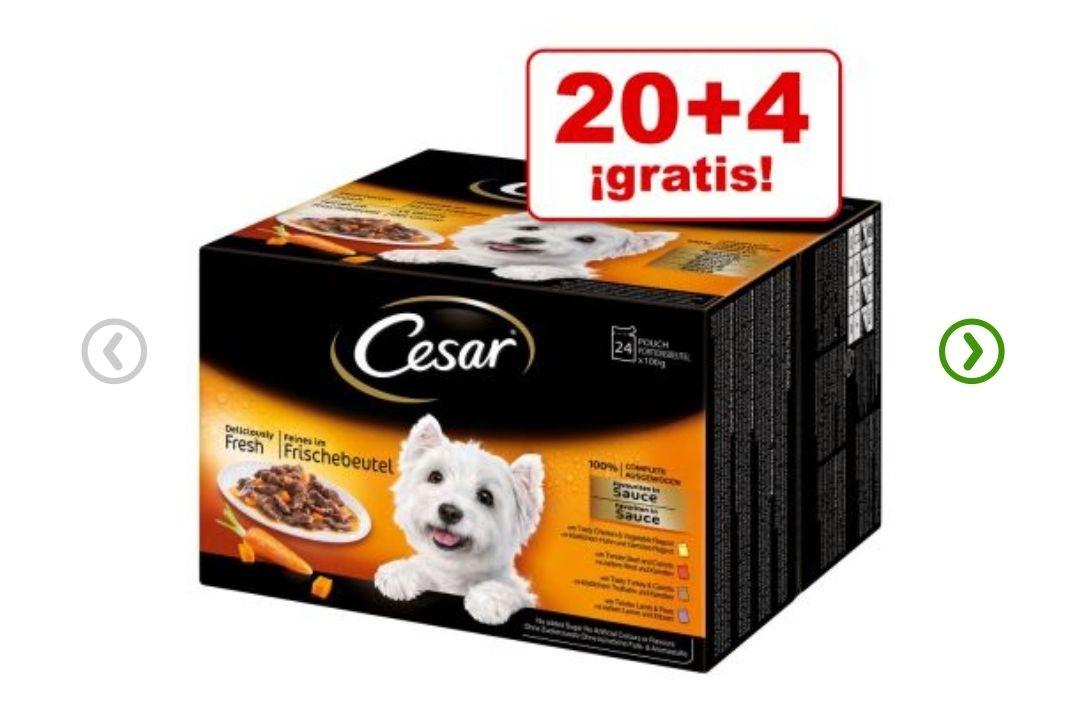 Comida Húmeda perros - Cesar