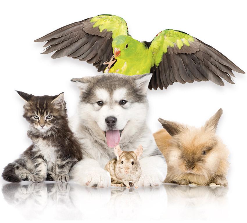 10€ regalo al comprar 30€ en productos para mascotas