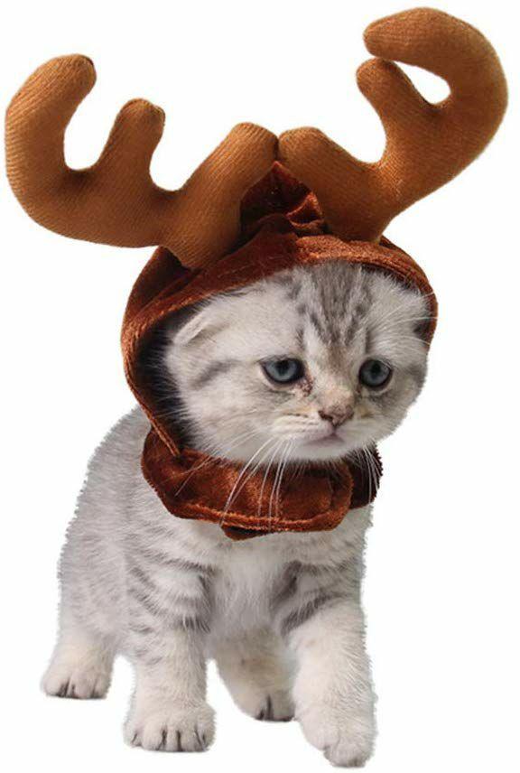 Cuernos de reno para gato