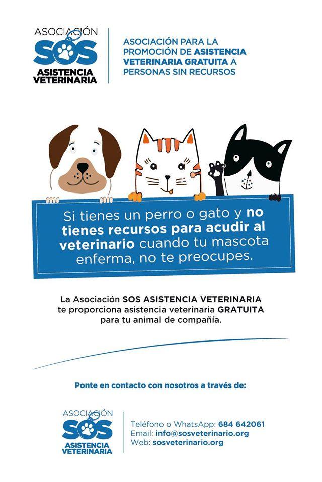 Asistencia veterinaria GRATUITA personas con pocos recursos Gijón