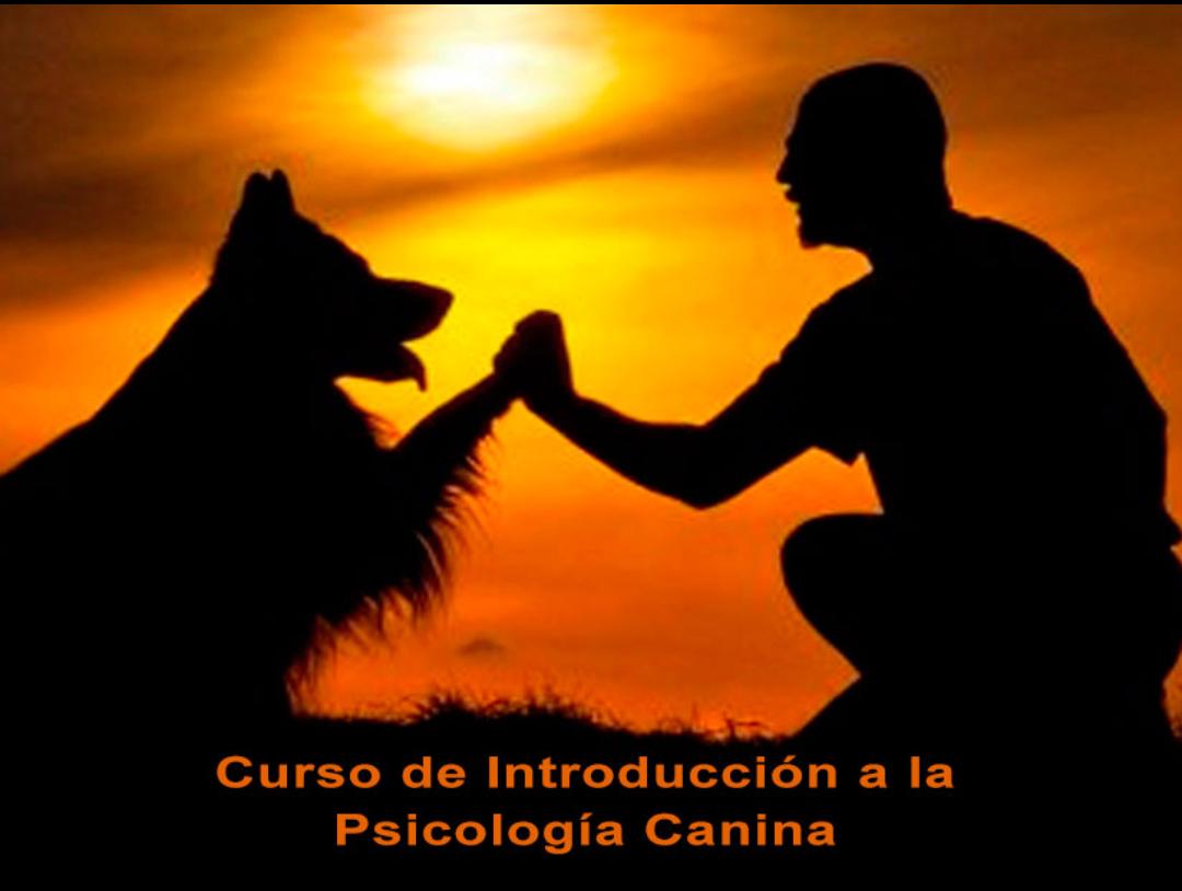Curso Gratuito de Introducción a la Psicología Canina