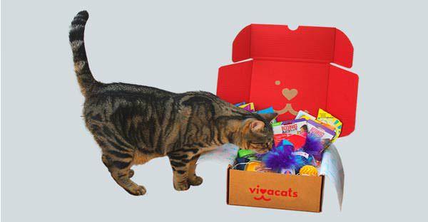 Caja mensual Gatos vivacats