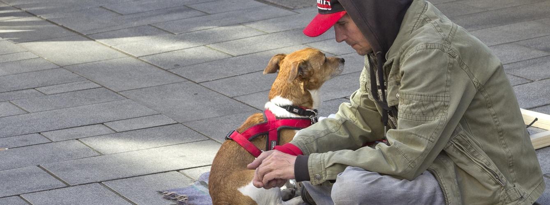 Atención gratuita para las mascotas de personas sin recursos