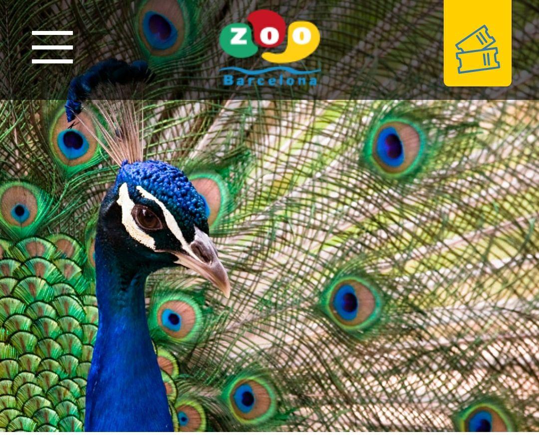 50% en entradas al zoo de barcelona hasta el 1/3/2020
