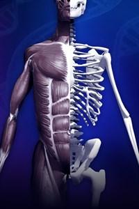 Anatomia RA: Cuerpo Humano