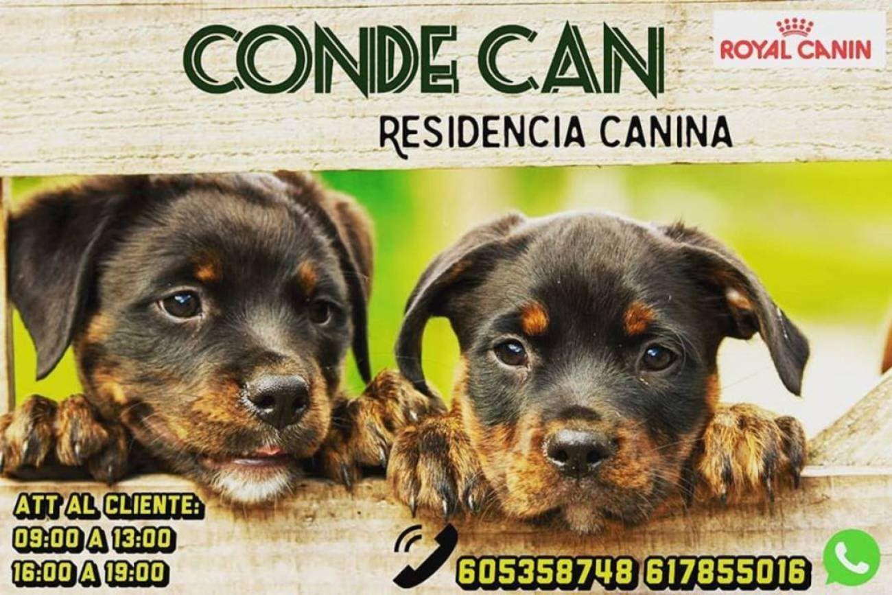 Gratis Residencia Canina para sanitarios (Madridejos, Toledo)