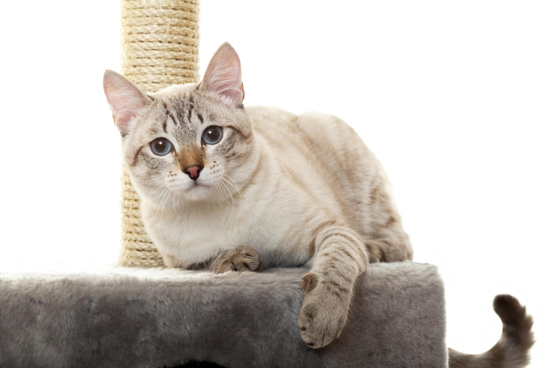 Rascadores Para Gatitos Recopilación + Envío Gratis