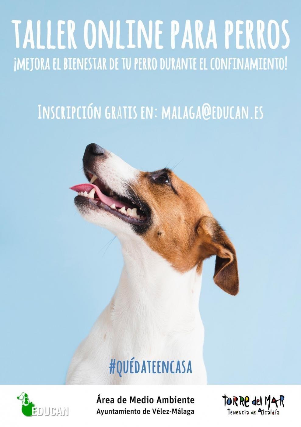 Gratis Clases educación animal