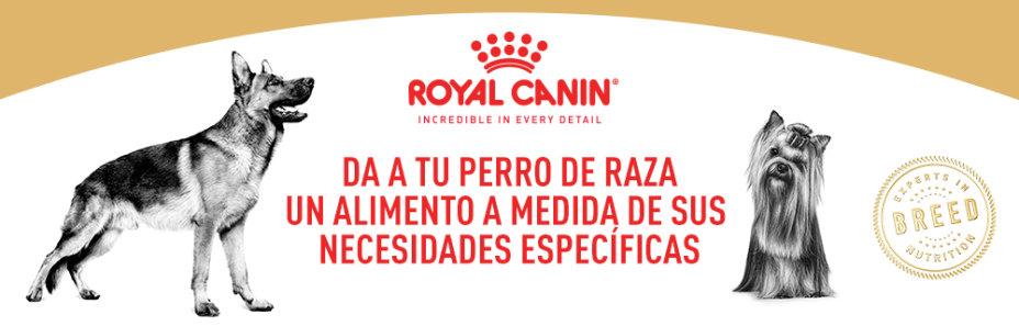 Compra ahora 8 / 15 kg de pienso Royal Canin Size y llévate 1,5 / 3 kg de Royal Canin Breed por 4€