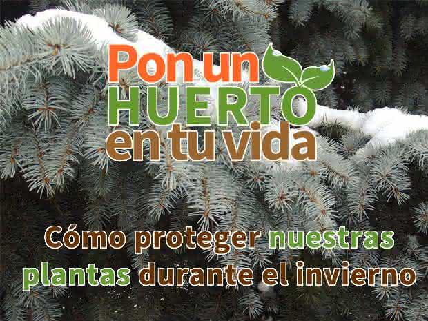 Cursos de horticultura + Calendario de siembra (PDF) GRATIS