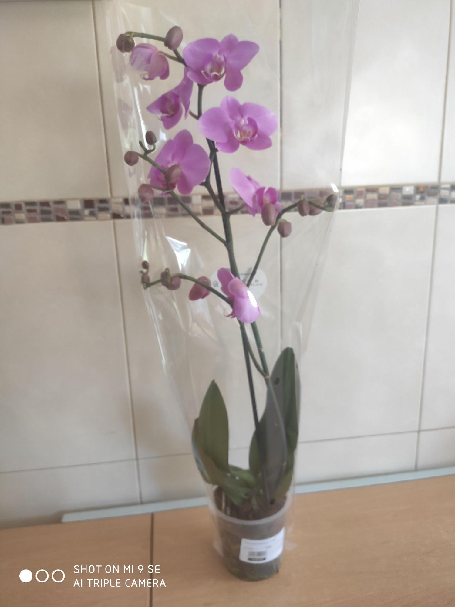Orquídeas a 5.99 en el VERDECORA( Zaragoza)