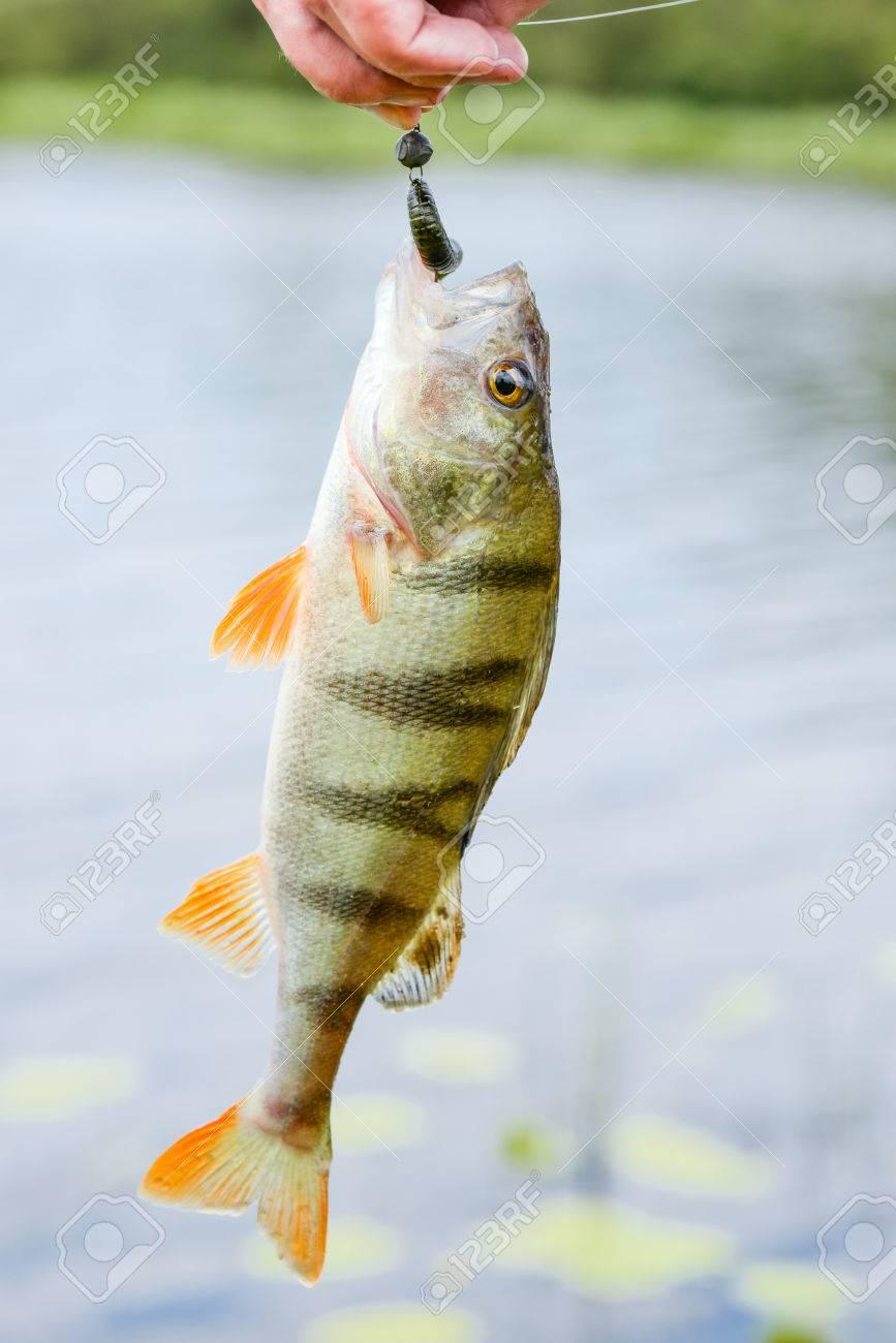 Descuentos en muchos artículos de pesca