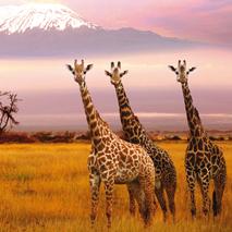 Vuelos (Baratos) a Kenia desde España (Desde SOLO 351€)i/v