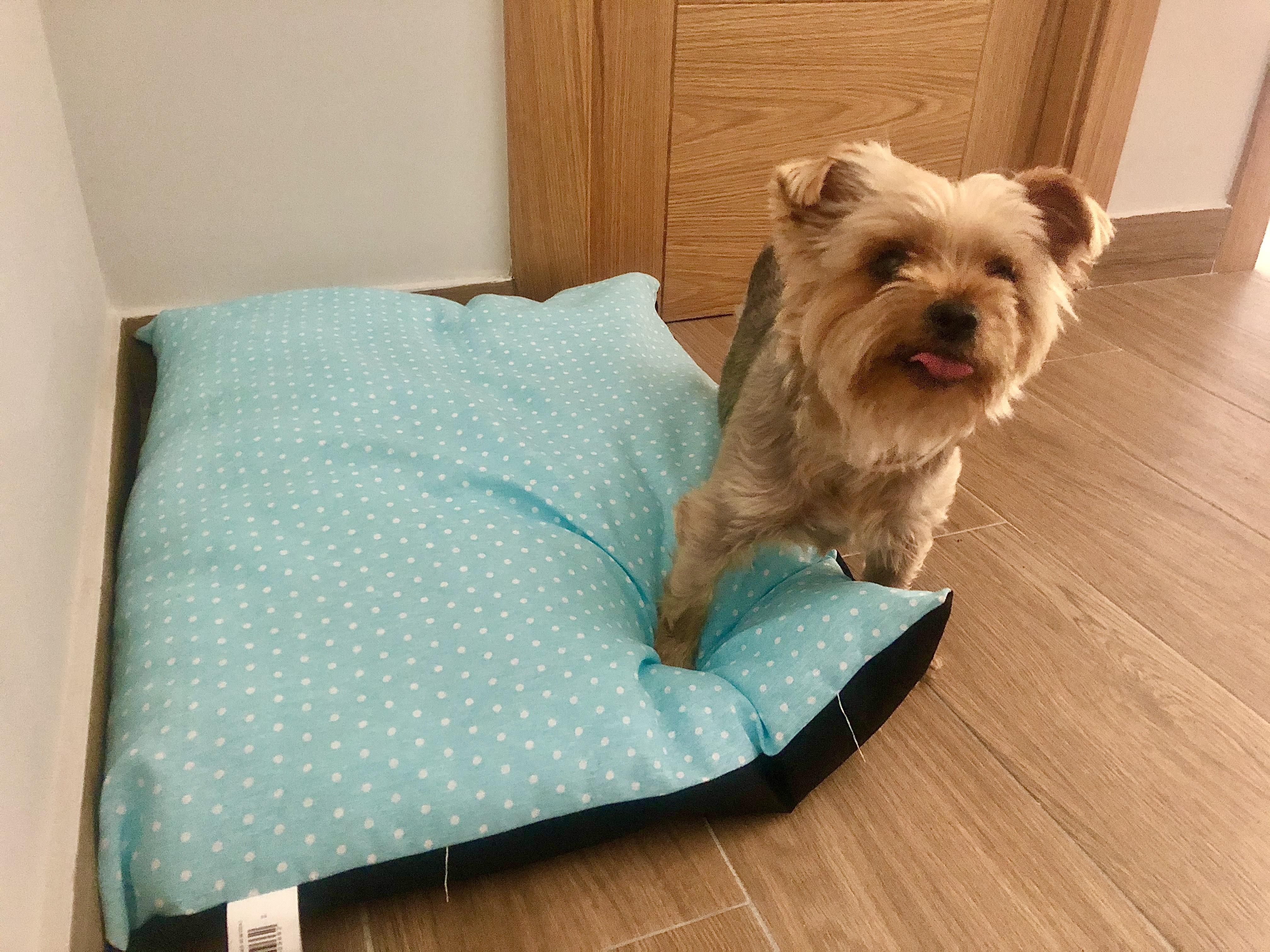 Cama de perro GRATIS por compra superior a 50€ - Tiendanimal