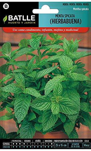 Recopilación Semillas Aromáticas - Menta Spicata (Hierbabuena) y unas cuantas más
