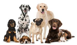 Identificar razas de perros (Android)