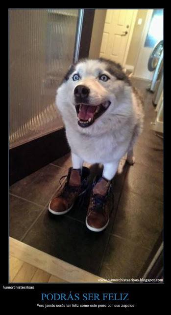 Recopilación de calzado para todos
