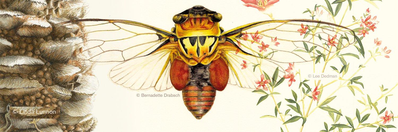 Curso gratuito de Ilustración de Naturaleza online