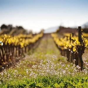 Bodega Santa Cecilia - 20% de descuento en bebidas (sólo Península)