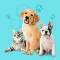 Útiles para mascotas (ver descripción)