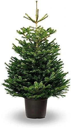 50% de descuento en árboles de navidad