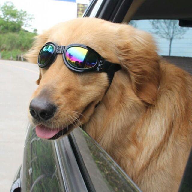 Gafas de moda Para Mascotas Perros Gatos Gafas de Sol de Los Ojos Gafas de Protección Del Animal Doméstico Fresco Mascota Fotos Props