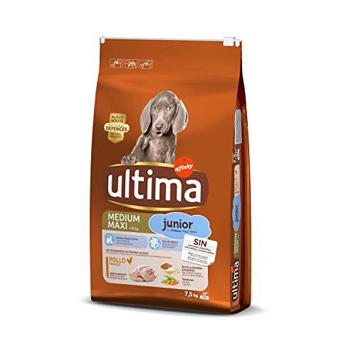 Última perros medium maxi junior 7'5k