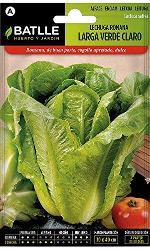 Gran variedad de semillas de verduras