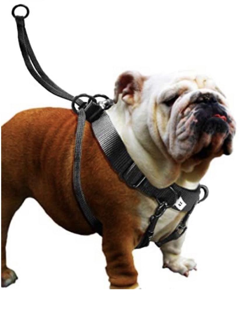 Cómodo arnés para el perro talla XL
