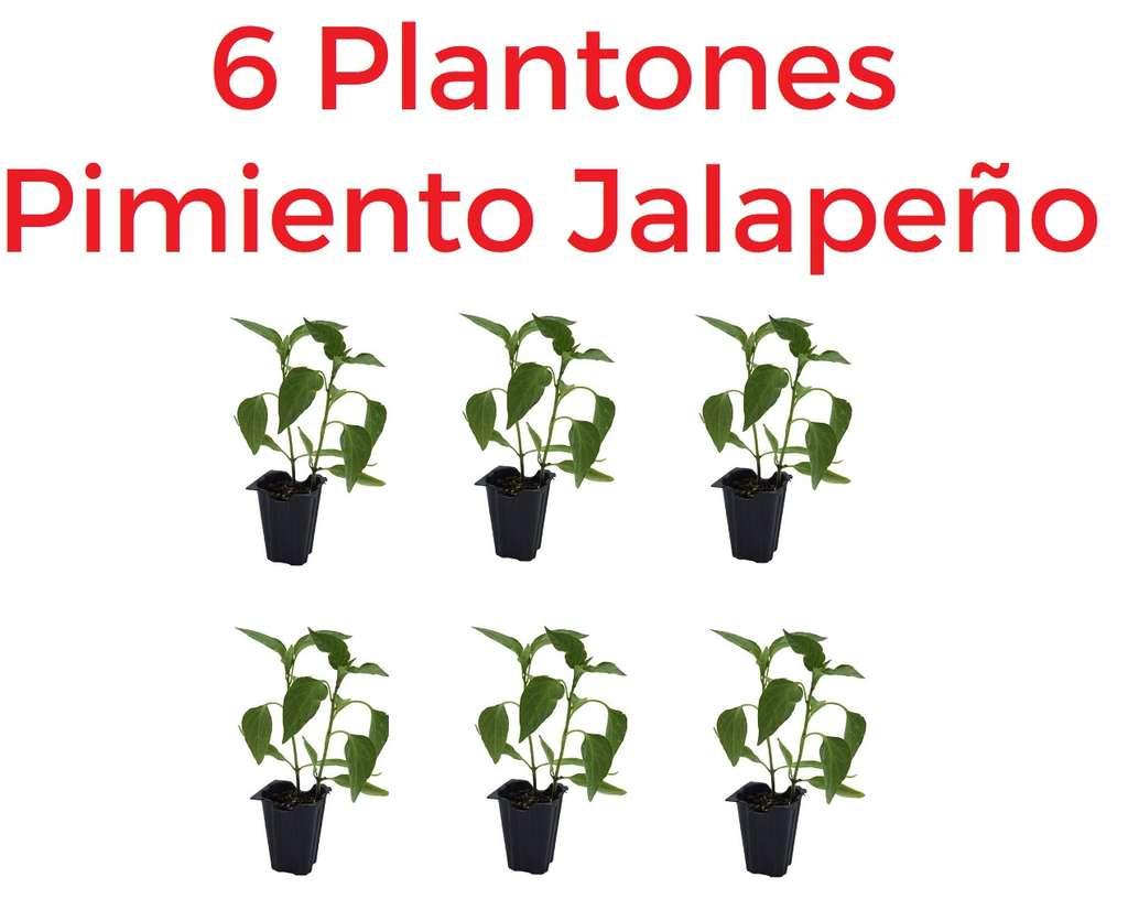 6 Plantones pimiento Jalapeño o Serrano picante