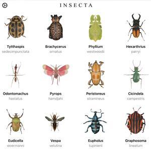 Insecta, Ananda, Halo PDF, Draw Studio, Easy Filters y Pixelizator [IOS]
