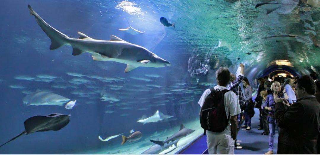 ¡Descubre el Oceanografic de Valencia! Entradas+Noche de Hotel 4* por solo 50€ (PxPm2)