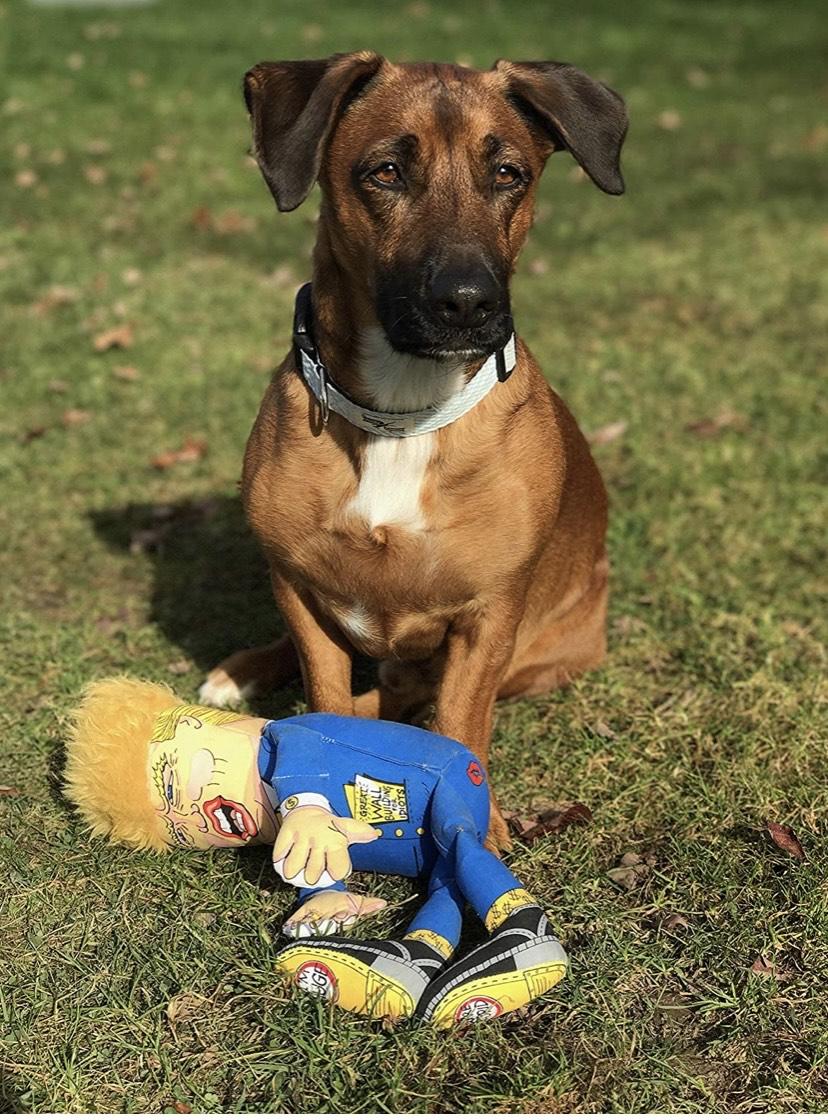FUZZU Donald - Juguete para Perro, tamaño Grande